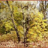 Осенняя роща :: vadim