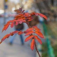 Уходящая осень... :: Наталья Rosenwasser