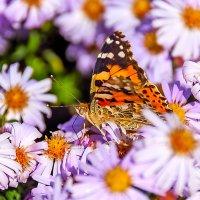 У нас еще бабочки... :: Елена Васильева