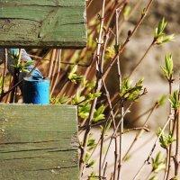 весна :: solar world ....
