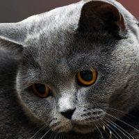 Плюша 2-из серии Кошки очарование мое! :: Shmual Hava Retro