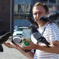 Выборгские голуби :: Константин Жирнов