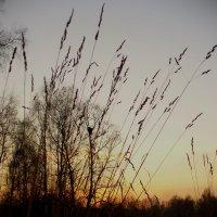 Осень :: Екатерина Павлова