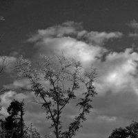 Необычное дерево :: Павел Зюзин
