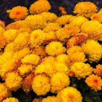 Осенние цветы :: Евгений Евдокимов