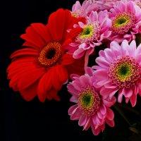Цветы.. :: Наталья Хохлова