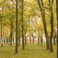 красоты осени :: Дарья Неживая