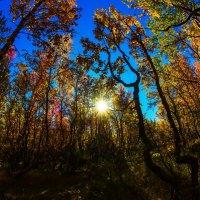 Осенние лучи :: Александр Неустроев