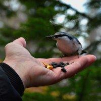 Птичка :: Александр Краснов