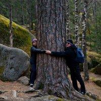 Дерево :: Александр Краснов