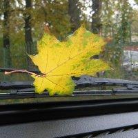 Осень на ветровом стеле :: Александр Рязанцев