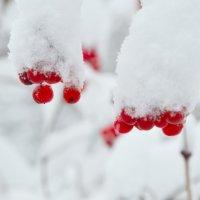 Зима :: Виктор Трохименко