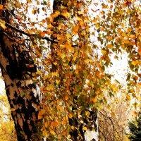 Осень золотая))) :: Павел Тюпа