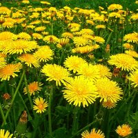 Желтая поляна :: Victor Klyuchev