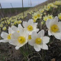 весна ! :: Ольга