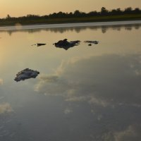 Соленое озеро :: Belyj_Volk