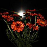 Цветы :: Лида Подволоцкая