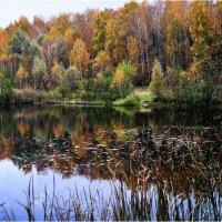 Лесное озеро. :: Константин Ушмаев