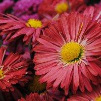 Никитский ботанический сад :: Kate Zimens