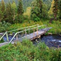 Таёжный мостик. :: Наталья Юрова