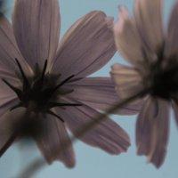 Обратная сторона цветов :: Елена Васильева