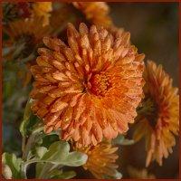 Оранжеевое настроение :: LARCHIK-55