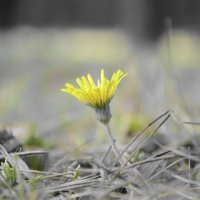 проснулся в надежде на весну :: Денис Samuila