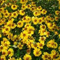Летние цветы :: Константин Жирнов