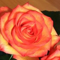 розы.. :: Анна Уварова