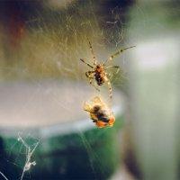 Spider Hunt :: Никита Дьяковский