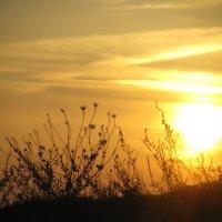 засыпало Солнце... :: Алина