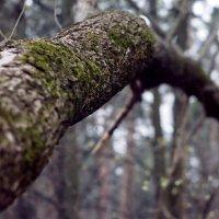Дерево :: Bermuda Разуева