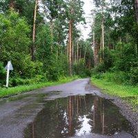 После дождя. :: Владимир Михайлович Дадочкин