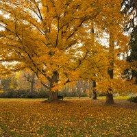 Золотая осень :: Яков Геллер