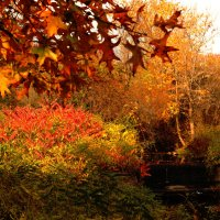 Осенний пейзаж :: Яков Геллер