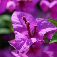 тайский цветок :: Denis Mishin