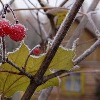 Первые заморозки :: Елена Тренкеншу