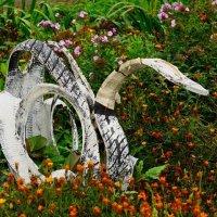 Лебедь... :: Сергей Банков