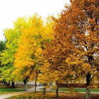 Четыре цвета осени :: Виталий Максютенко