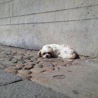 Китай-собака-барабака :: Yuriy Sydoruk