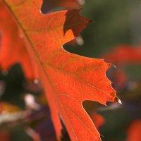 Осенние листья :: Диана С