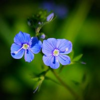 Лесной цветок :: Victor Klyuchev