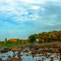 Осень :: Ольга Передрей