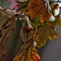 Тепло ноября :: Наталия M