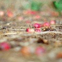 яблочки :: Толя Максименко