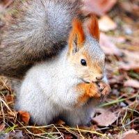 Nuts :: Mags Khalyapov