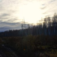 лес :: Александр Краснов