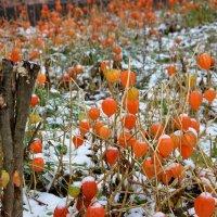 Первый снег :: Лидия Мамаева