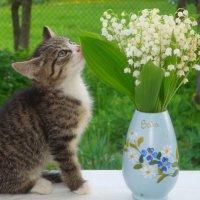 Котёночек :: Mariya laimite