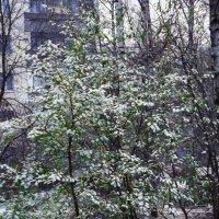 первый снег :: Сергей Кочнев